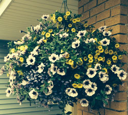 hanging basket photo